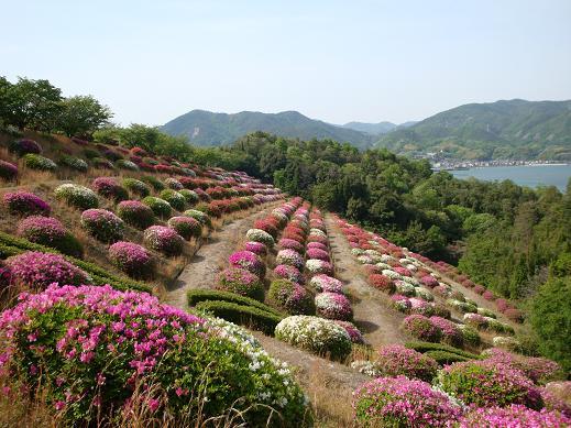 稚児公園・花が見頃です_e0175370_2149963.jpg