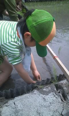 初田植え+海釣りなう。_d0028272_1517818.jpg