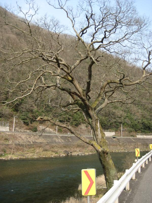 城下町を歩く(9)河井継之助ゆかりの地を歩く_c0013687_7121545.jpg