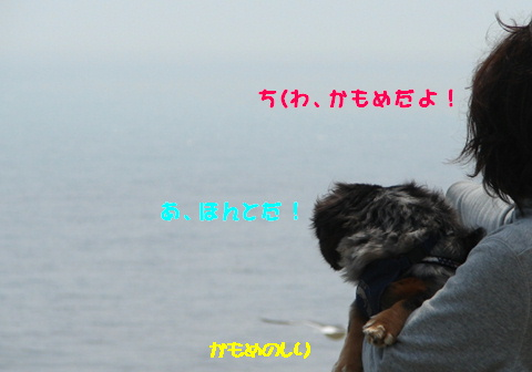 f0195891_1655138.jpg