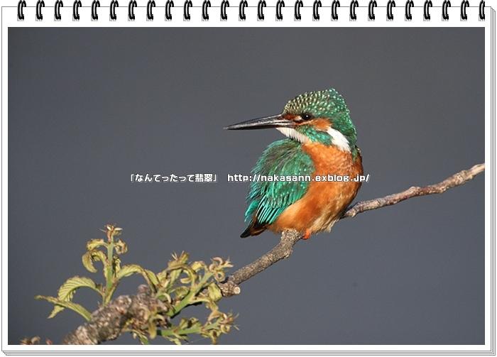 c0128399_18445112.jpg