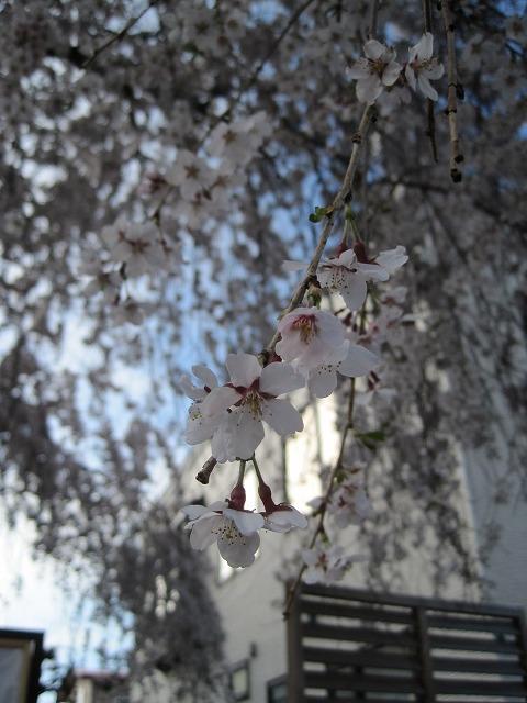 近所をお散歩・・・_f0202703_21312317.jpg