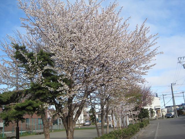 近所をお散歩・・・_f0202703_21353750.jpg