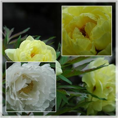 庭の花_c0051105_136499.jpg