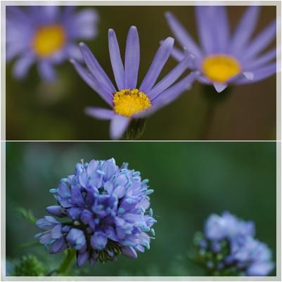 庭の花_c0051105_1371045.jpg