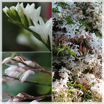 庭の花_c0051105_1372465.jpg