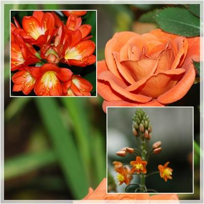 庭の花_c0051105_1373712.jpg
