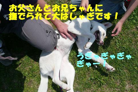 f0121712_6374123.jpg