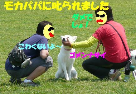 f0121712_7204536.jpg