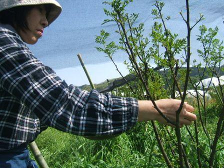 花山椒の収穫終わる ~ モグラの赤ちゃん_c0220321_15221749.jpg