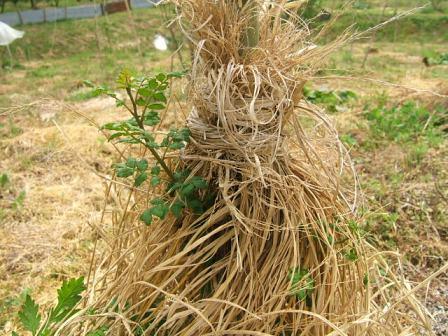 花山椒の収穫終わる ~ モグラの赤ちゃん_c0220321_15402139.jpg