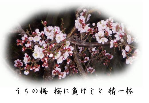 f0227323_19341230.jpg