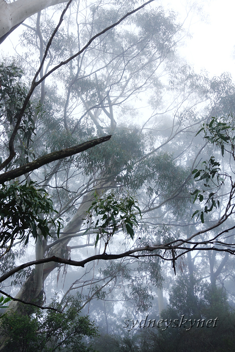 Katoomba Falls in the Fog of BlueMountain_f0084337_19391577.jpg