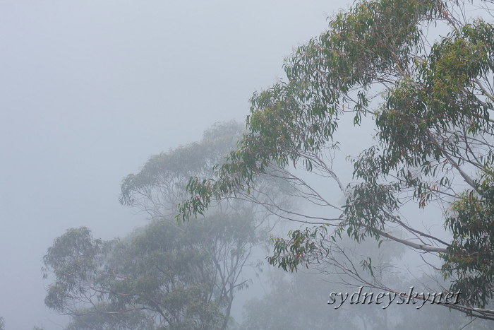 Katoomba Falls in the Fog of BlueMountain_f0084337_19394092.jpg