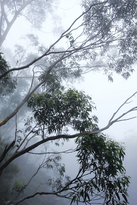 Katoomba Falls in the Fog of BlueMountain_f0084337_19395991.jpg