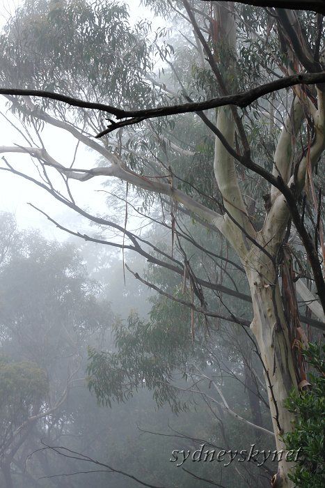 Katoomba Falls in the Fog of BlueMountain_f0084337_19404750.jpg