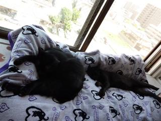 くっさぁい猫 のぇるろった編。_a0143140_23534613.jpg