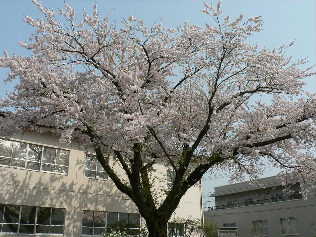 町中標準木とその界隈_d0001843_23563557.jpg