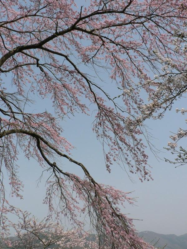 町中標準木とその界隈_d0001843_2357773.jpg