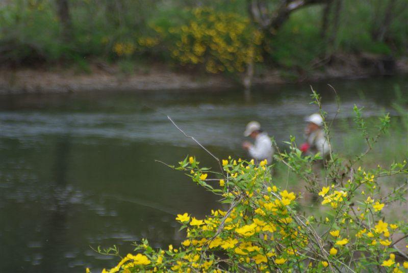 今年2度目の木曽川水系_f0064359_20314433.jpg