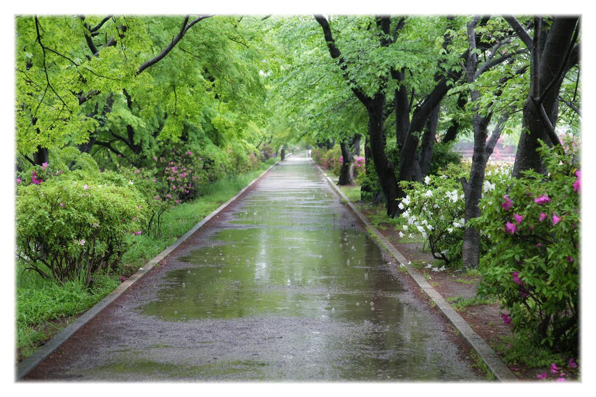 五月雨は何色?_f0021869_0172028.jpg