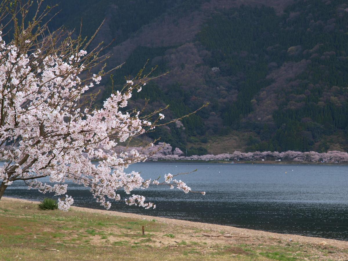 滋賀 春の琵琶湖を一周ブログ旅_f0021869_22595946.jpg