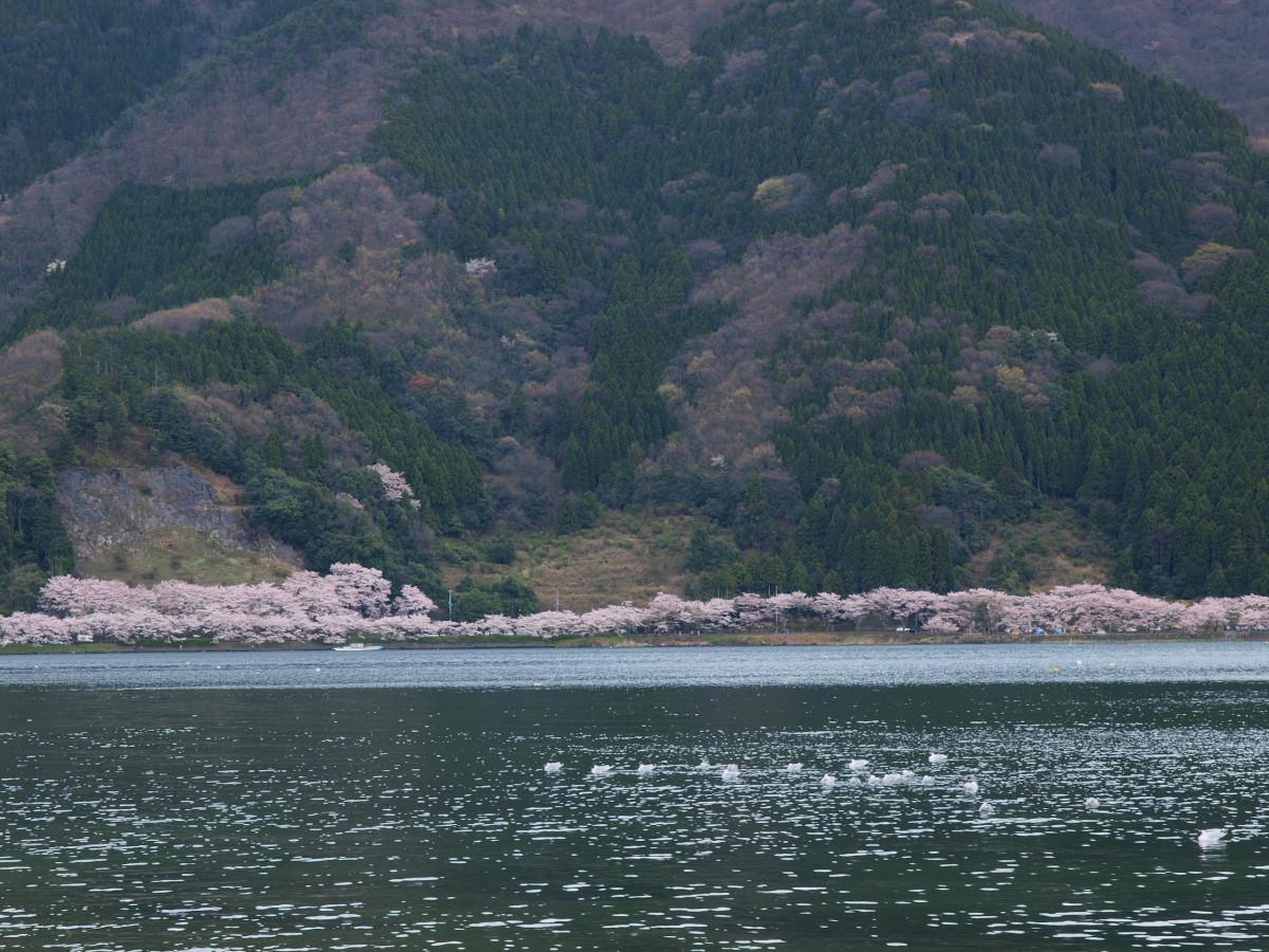 滋賀 春の琵琶湖を一周ブログ旅_f0021869_2314037.jpg