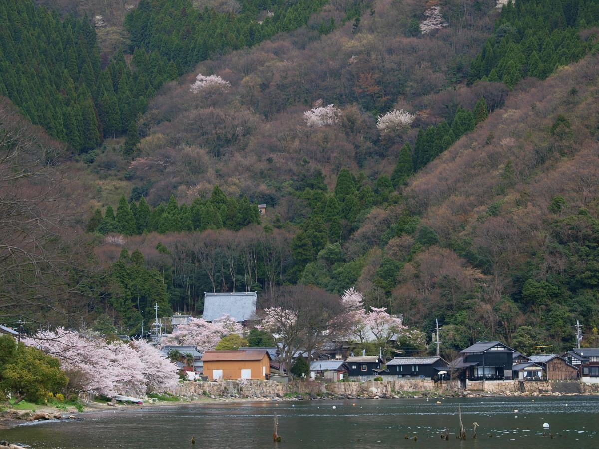 滋賀 春の琵琶湖を一周ブログ旅_f0021869_232121.jpg