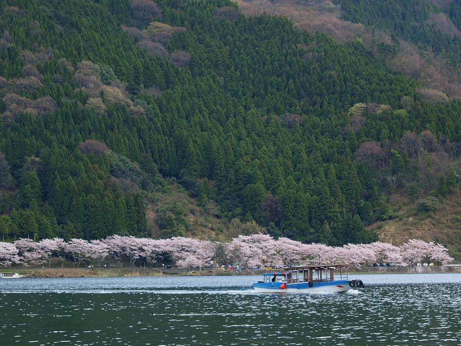 滋賀 春の琵琶湖を一周ブログ旅_f0021869_2322366.jpg