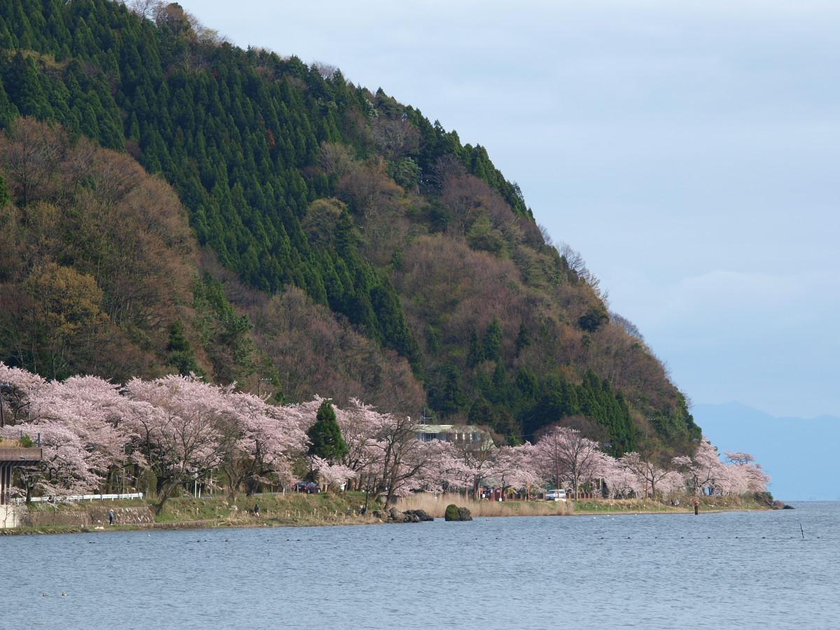 滋賀 春の琵琶湖を一周ブログ旅_f0021869_233064.jpg