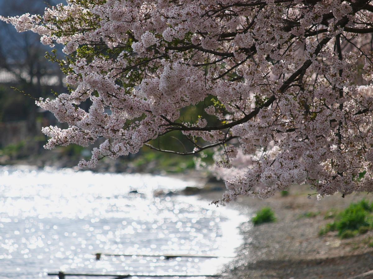 滋賀 春の琵琶湖を一周ブログ旅_f0021869_2331793.jpg