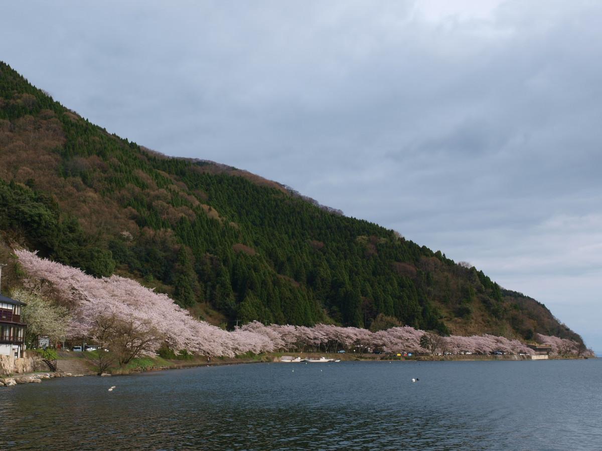 滋賀 春の琵琶湖を一周ブログ旅_f0021869_2335320.jpg