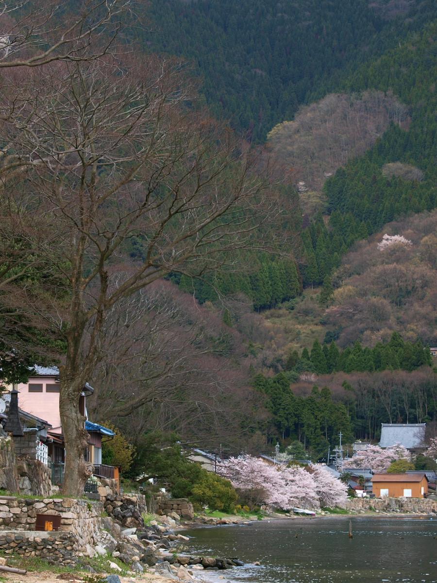 滋賀 春の琵琶湖を一周ブログ旅_f0021869_2383095.jpg