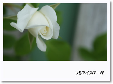 f0166982_22183455.jpg