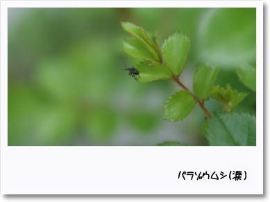f0166982_2218439.jpg