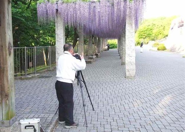 写真  満開のふじの咲く丘_f0214527_11251925.jpg
