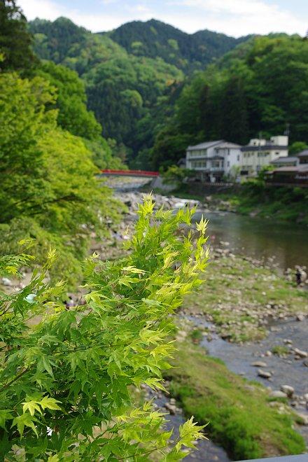 風薫る新緑の香嵐渓_e0171336_1445150.jpg