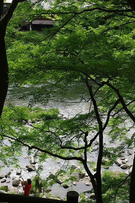 風薫る新緑の香嵐渓_e0171336_2154714.jpg
