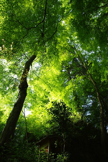 風薫る新緑の香嵐渓_e0171336_2185991.jpg