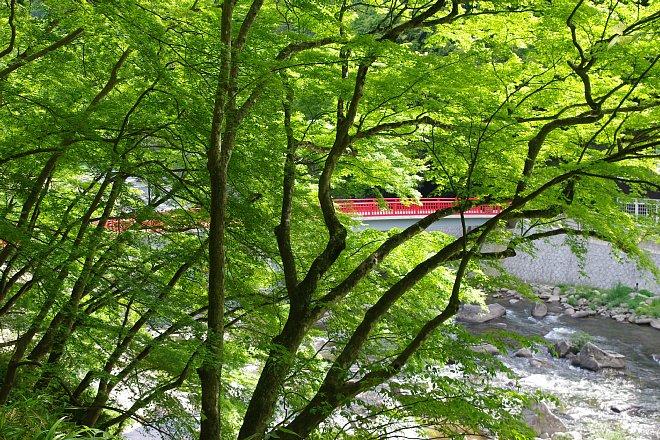 風薫る新緑の香嵐渓_e0171336_2332879.jpg