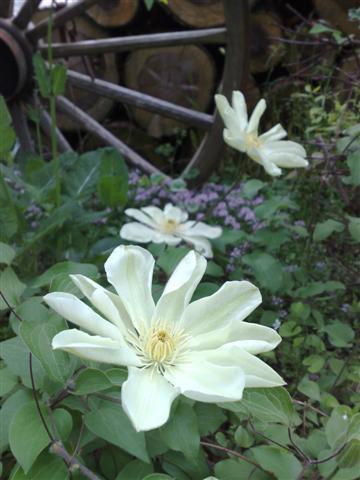 庭が賑やかです_b0132338_1812650.jpg