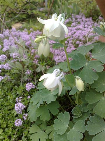 庭が賑やかです_b0132338_1822898.jpg