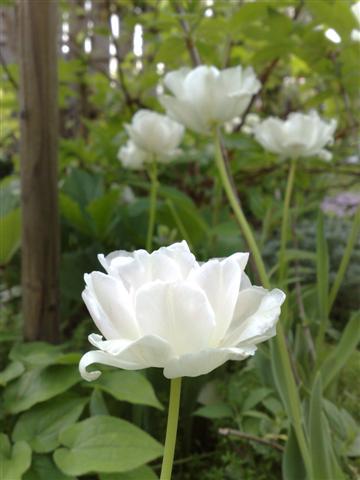 庭が賑やかです_b0132338_1844645.jpg