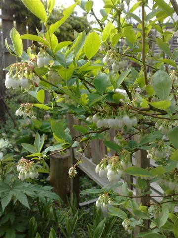 庭が賑やかです_b0132338_1851238.jpg