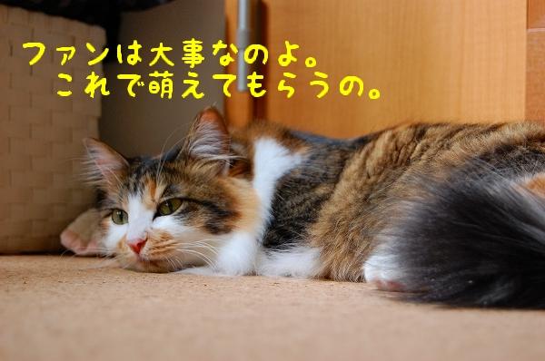 c0181639_0402040.jpg