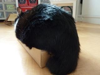 ろったにゃん☆サイズ猫 空ろった編。_a0143140_2364124.jpg