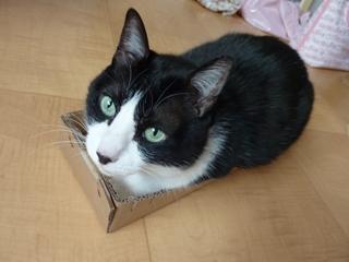 ろったにゃん☆サイズ猫 空ろった編。_a0143140_238023.jpg