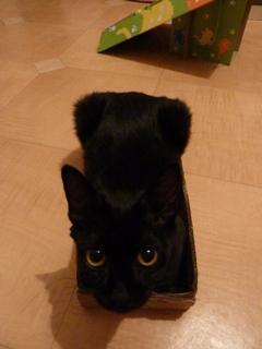 ろったにゃん☆サイズ猫 空ろった編。_a0143140_2391387.jpg
