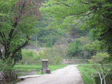 新緑の菅沼集落_f0233340_18133415.jpg