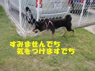 c0211642_189826.jpg